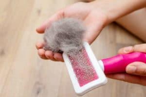hairball cat