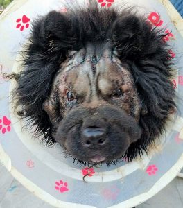 הצלת ראיה של הכלב רוקי