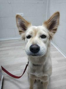 תגובה אלרגית בכלב
