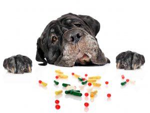 כלב אכל תרופה
