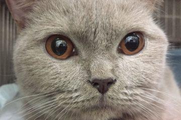 גור חתולים מרייר וחלש – העיניים שאומרות הכל…