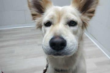תגובה אלרגית בכלבה