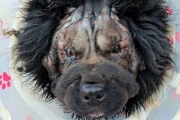 מתיחת פנים לכלב